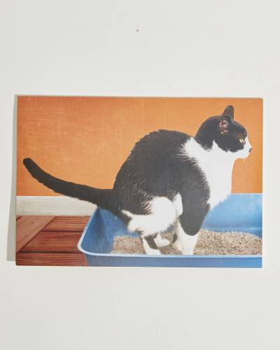 Shoebox Cat Litter Box Birthday Card (Humor)