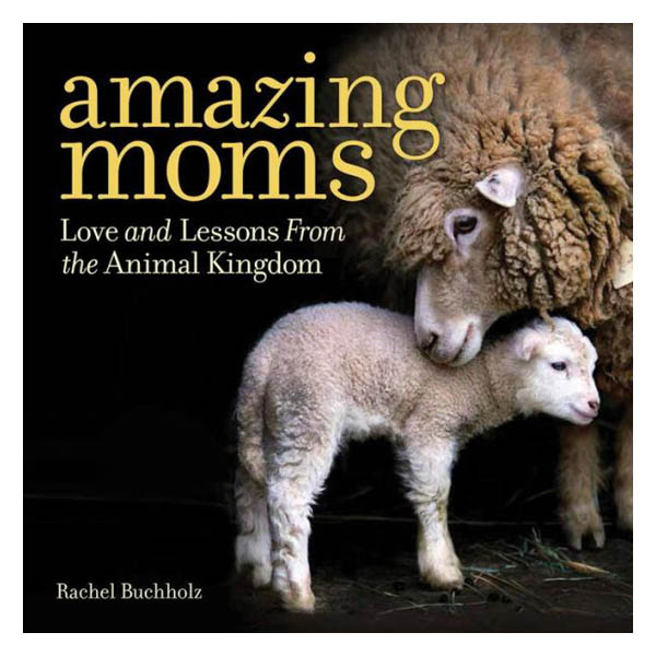 Rachel Buchholz Amazing Moms: Love and Lessons From the Animal Kingdom (Hardcover)