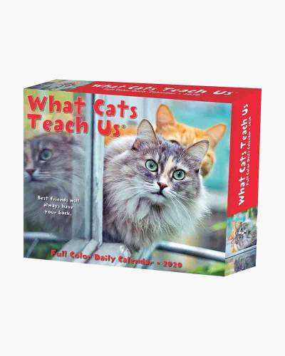 What Cats Teach Us 2020 Day-to-Day Calendar