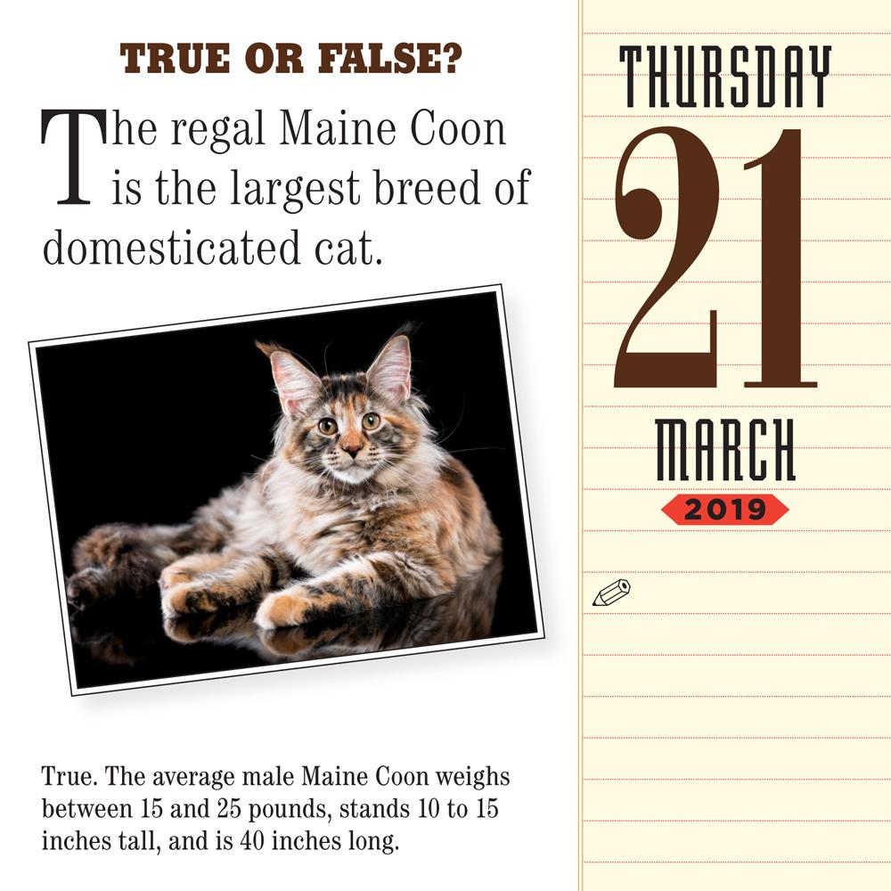 Cat Trivia 2019 Daily Desk Calendar