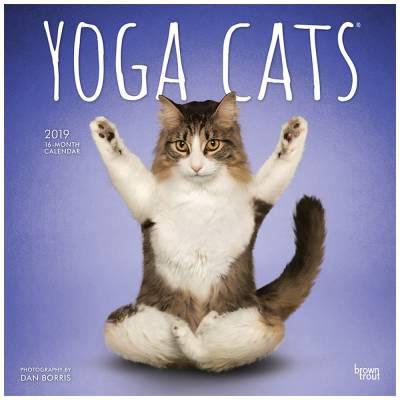 Yoga Cats 2019 Wall Calendar