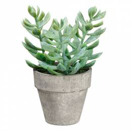 Allstate Floral and Craft Potted Succulent Plant