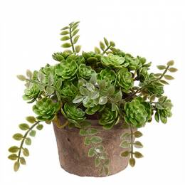 Allstate Floral and Craft Clay Potted Succulent Plant
