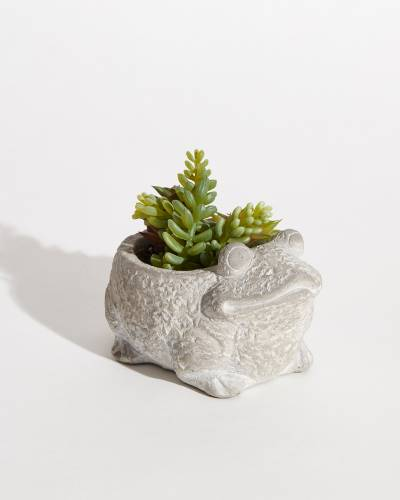 Faux Potted Succulents - Frog