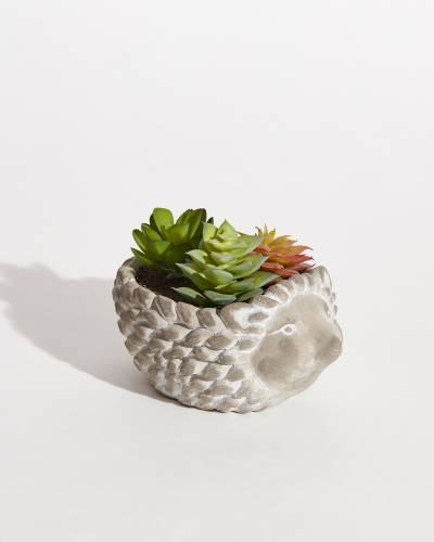 Faux Potted Succulents - Hedgehog