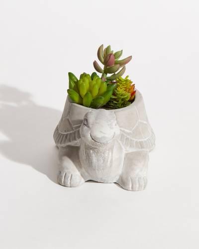 Faux Potted Succulents - Turtle
