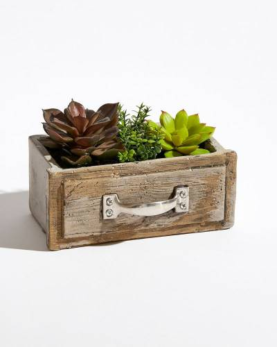 Decorative Succulents Trio in Drawer (Assorted)