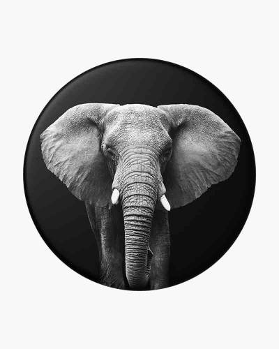 Loxodonta Africana Swappable PopSockets Phone Grip