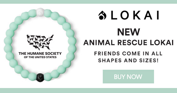 new lokai in support of animal rescue